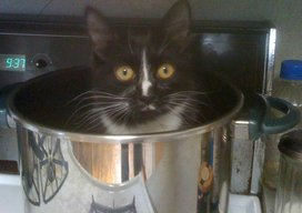 Margot_potted
