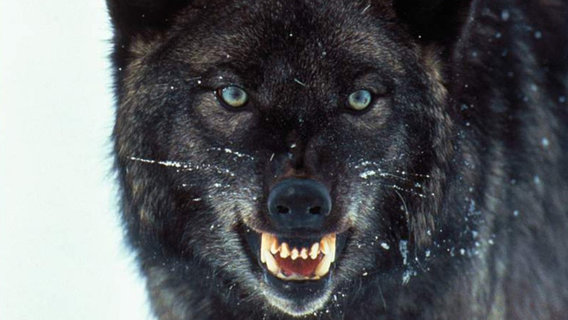 Whos-afraid-of-big-bad-wolves1
