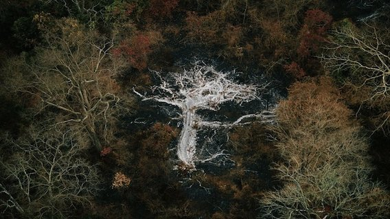 Yann_arthus_bertrand_tree