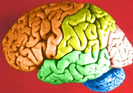 Brain%20colored