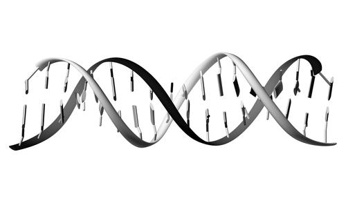 Synthetic DNA Created  Evolves on Its Own