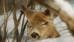 Bt_sleeping_deer_final