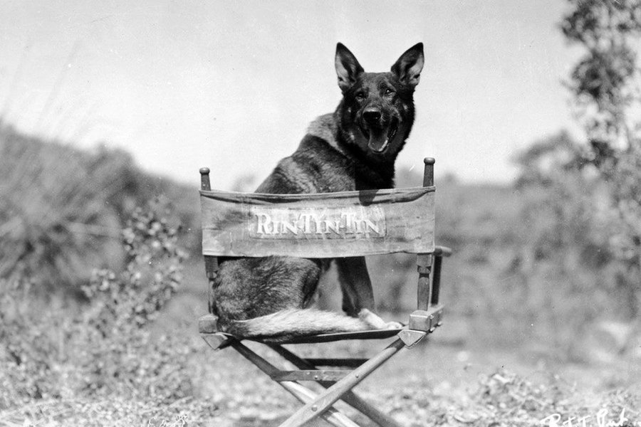 411151-dogs-rin-tin-tin