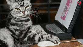 Cat_using_mouse_browsing_web