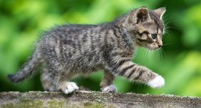 German_kitten_gettyimages-478072740