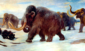 Wooly_mammoths_header