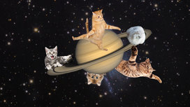 Saturn_with_cats