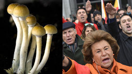 Mushrooms-vs-fascism