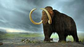 800px-woolly_mammoth