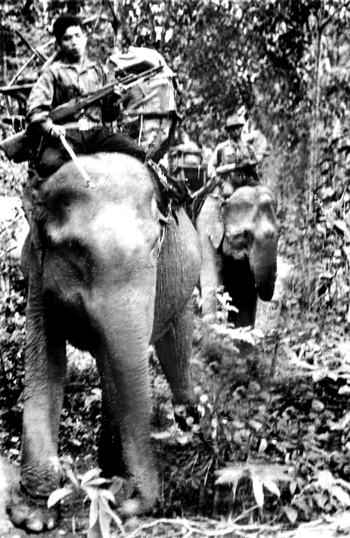 Viet Cong on elephants