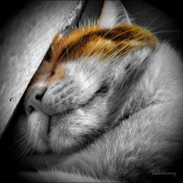cat-sleep