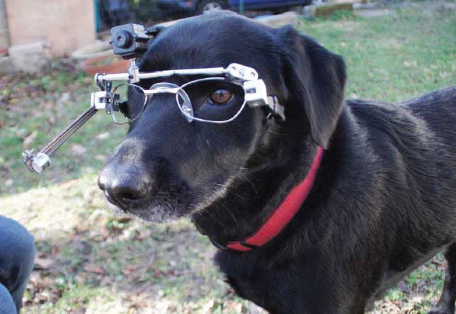 eye tracking for dogs